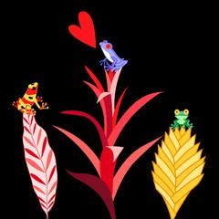 multi colored frogs
