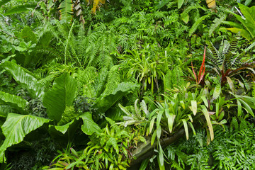 Lush green tropical jungle background
