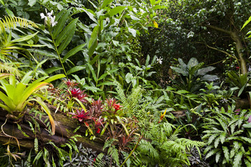 Lush green tropical jungle background