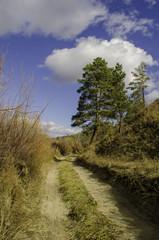 Fototapeta Road in a forest  obraz