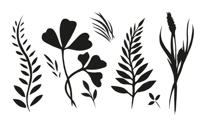 Set with plants, herbs and grasses painted ink