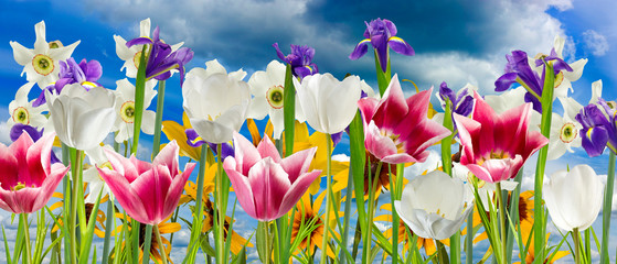image of beautiful flowers against the sky close-up
