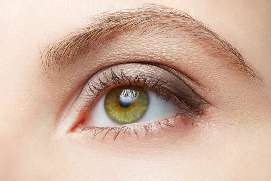 Green woman eye beauty with light brown make up, nude colors