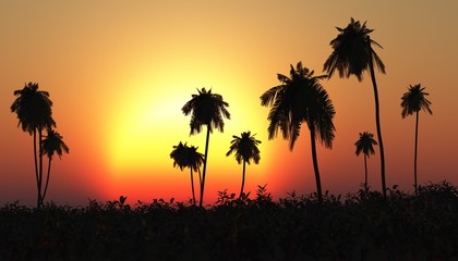 Tropical sunset, palm tree in the sun, tropical island