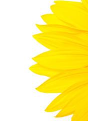isolierte Sonnenblume