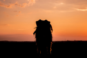 Dog stands in the sunset on a field