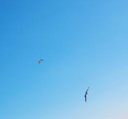 Birds soaring.