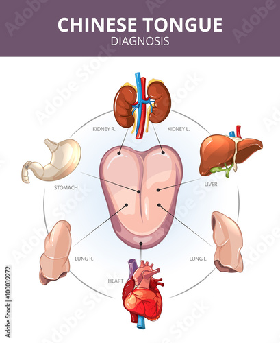 Chinese tongue diagnosis internal organs projections stomach and internal organs projections stomach and lung liver and organ internal ccuart Gallery