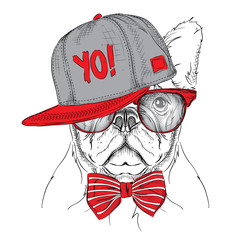 The poster with the image dog portrait in red and grey hip-hop hat. Vector illustration.