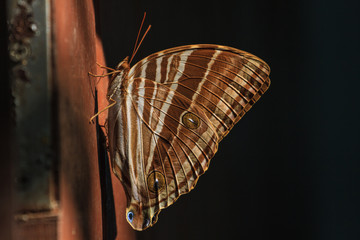 Butterfly, insect, macro insect
