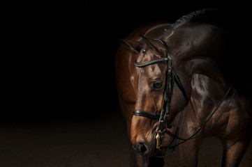 Spoed Foto op Canvas Paarden Portrait of a sport dressage horse