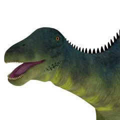 Brachytrachelopan Dinosaur Head - Brachytrachelopan was a herbivorous sauropod dinosaur that lived in Argentina during the Jurassic Period.