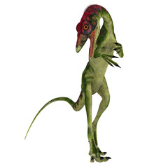 Compsognathus on White - Compsognathus was a small carnivorous theropod dinosaur that lived during the Jurassic Period of Europe.