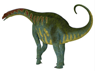 Jobaria Dinosaur Tail - Jobaria was a herbivorous sauropod dinosaur that lived in the Jurassic Period of the Sahara Desert in Africa.