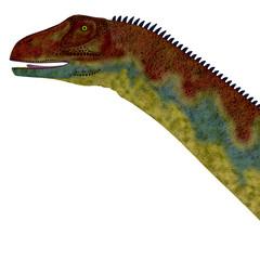 Jobaria Dinosaur Head - Jobaria was a herbivorous sauropod dinosaur that lived in the Jurassic Period of the Sahara Desert in Africa.