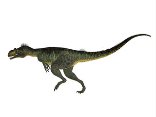 Megalosaurus Side profile - Megalosaurus was a large carnivorous theropod dinosaur that lived in the Jurassic Period of Europe.