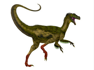 Ornitholestes Dinosaur Tail - Ornitholestes was a small carnivorous dinosaur that lived in the Jurassic Period of Western Laurasia which is now North America.