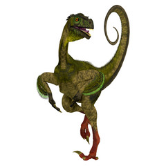 Ornitholestes on White - Ornitholestes was a small carnivorous dinosaur that lived in the Jurassic Period of Western Laurasia which is now North America.