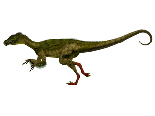 Ornitholestes Side Profile - Ornitholestes was a small carnivorous dinosaur that lived in the Jurassic Period of Western Laurasia which is now North America.