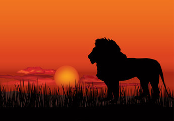 African landscape with animal lion silhouette. Savanna sunset  background