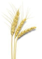 Three Stocks of Wheat
