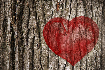 Red heart on the on tree bark