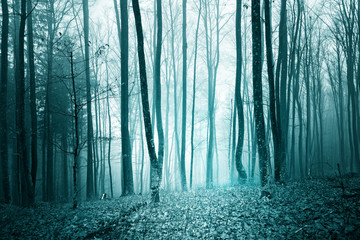 Wall Mural - Mystic turquoise blue color light foggy forest landscape background.