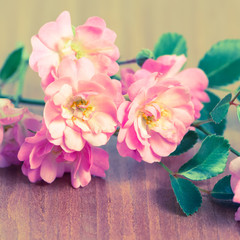 beautiful delicate pink rose on wooden background, toned style,