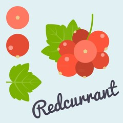 Vector bunch of Redcurrant, flat design