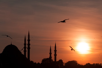 Suleymaniye Mosque and seagulls in sunset