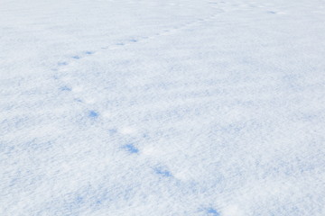北海道の雪 Snow image