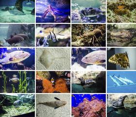 Collage - Pesci e Animali Marini