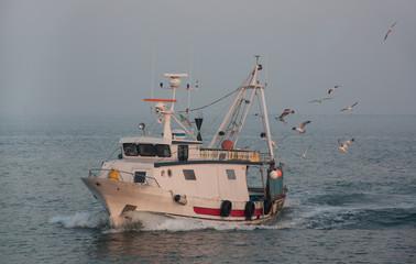 ship and gulls, morning
