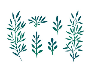 Set of branches with leaves and herbs for design