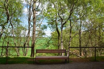 Holzbank in Frühlingslandschaft