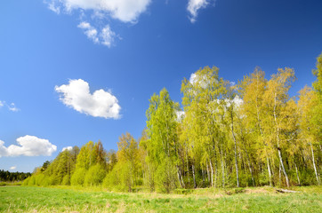 classical meadow and forest landscape