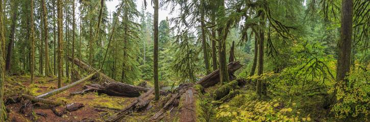 Hoh Rainforest, Olympic National Park, Washington state, USA Wall mural