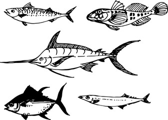 Fish set. Vector illustration