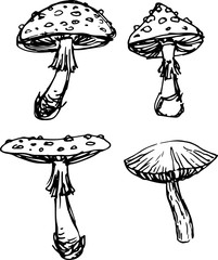 Mushroom set. Vector illustration