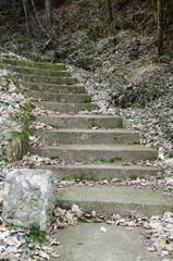 Old stairs in forest.
