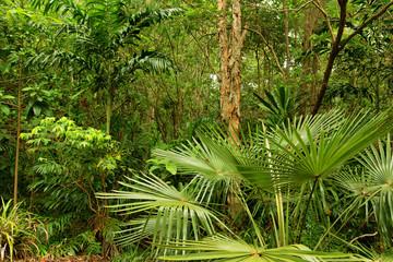 Cattana Wetlands, Cairns, Queensland, Australia