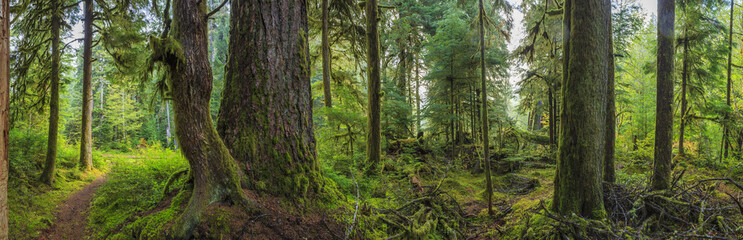 Hoh Rainforest, Olympic National Park, Washington state, USA