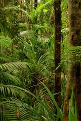 Rainforest near Kuranda, Queensland, Australia