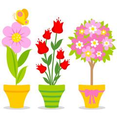 Cute flowers on pots