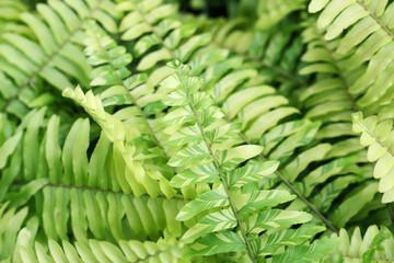 fern leaf background.