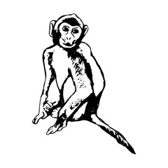 Monkey sitting - abstraction