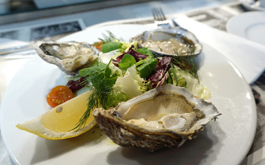 fresh oysters serving with salad