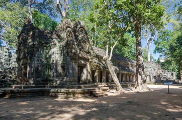 Ta Prohm temple, Famous temple in Siem Reap