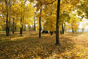 autumn forest, park