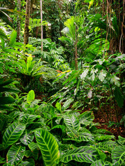 Tropical Garden, Cairns, Queensland, Australia